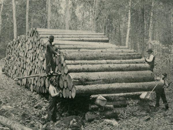 Scaling logs in the Adirondacks