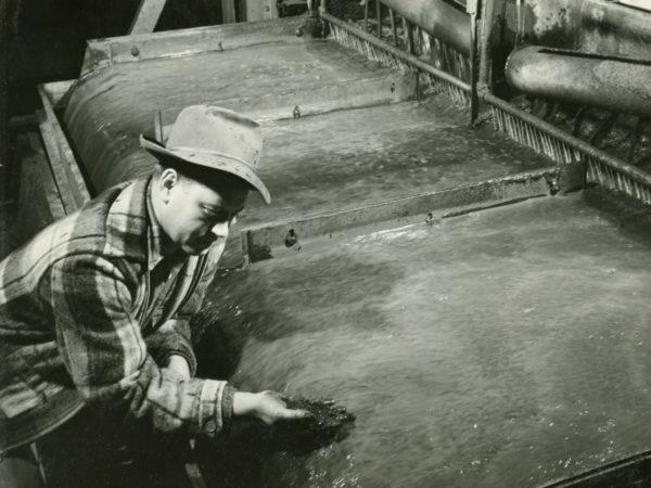 J&L worker examines iron ore slurry at Jones & Laughlin Steel Corporation in Benson Mines