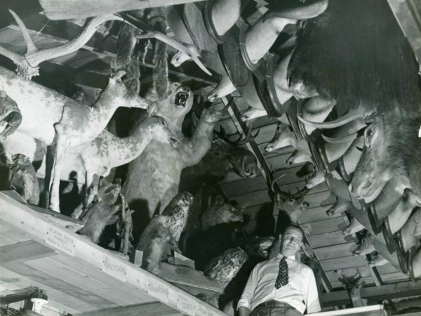 Taxidermy animals inside the Trading Post in Eagle Bay