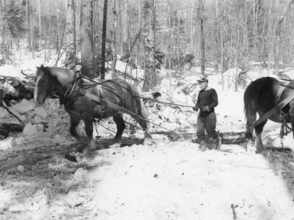 Skidding logs with horse for Clarence J. Strife's logging operation in the Town of Webb