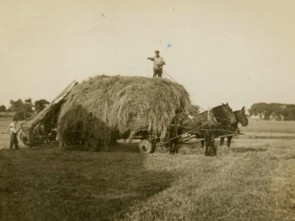 Cutting loose hay in the Town of De Kalb