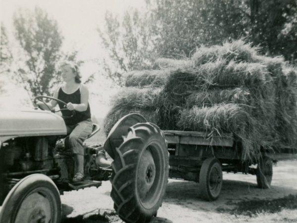 The last load of hay in the Town of De Kalb