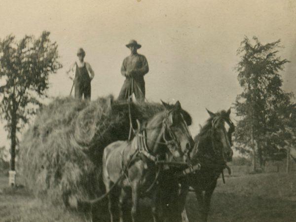 Load of loose hay in the Town of De Kalb