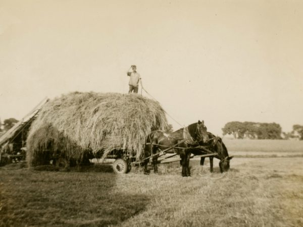 Loading loose hay onto a wagon in the Town of De Kalb