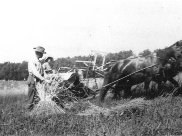 Reaping grain on the Wallace Farm in Canton