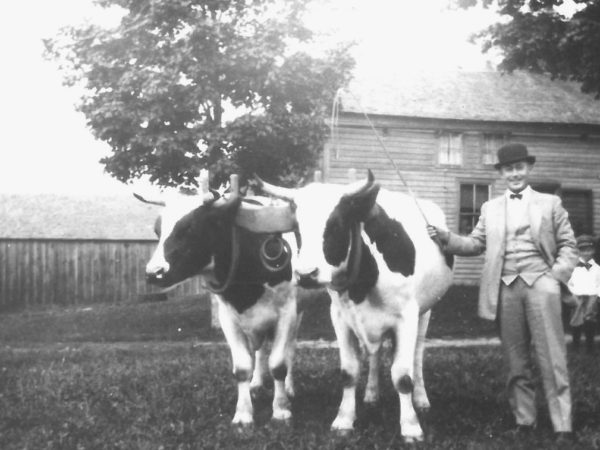 Bishop Shipman ready for the fair with team of oxen on the Wallace Farm in Canton