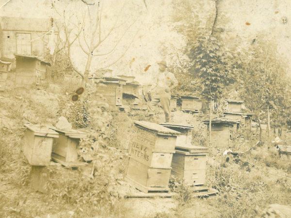 John Crawley's bee yard in Colton