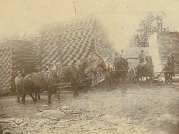 Men with horses in front of lumber stacks at Cardiff and Sons sawmill in Fine