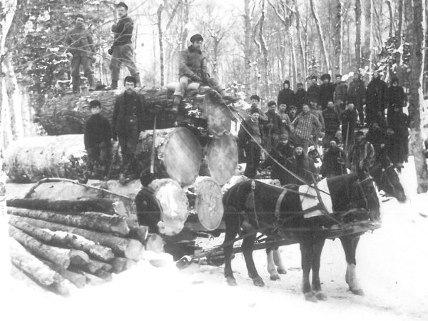 Group of loggers in the woods of Fine