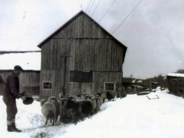 Farmer with flock of sheep in winter in Hermon