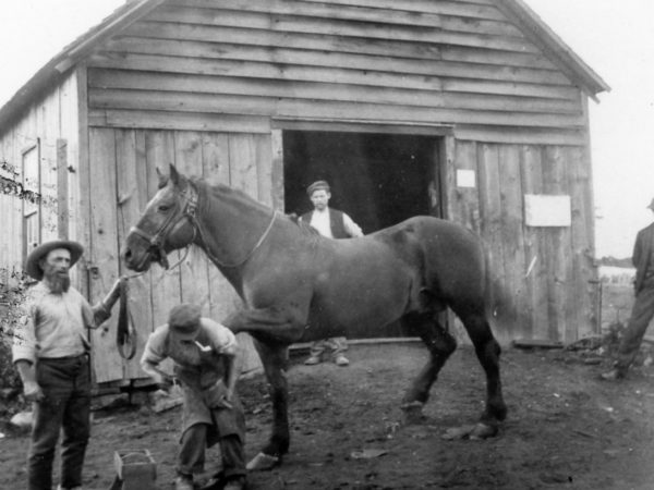 Farrier shoeing a horse in Hammond