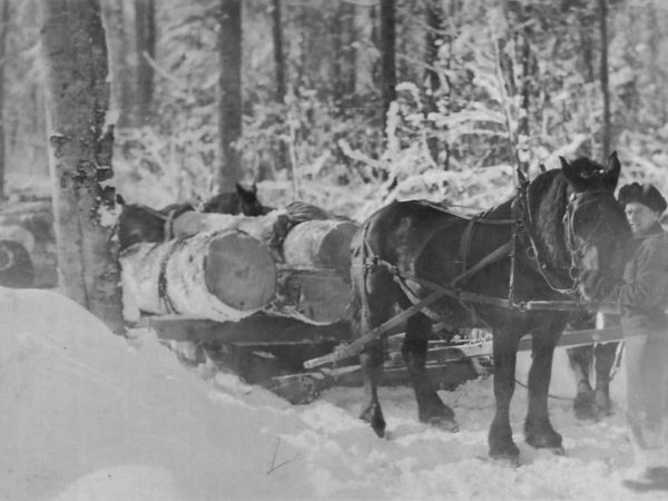 Hauling hardwood logs to the railroad at Brandy Brook in Cranberry Lake