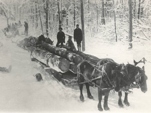 Four bobsleds hauling logs to the railroad at Brandy Brook in Cranberry Lake