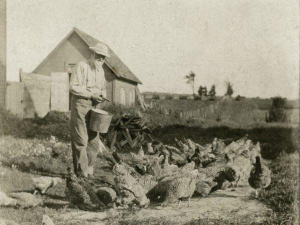 Grandpa Matteson feeding chickens on a homestead in Hermon