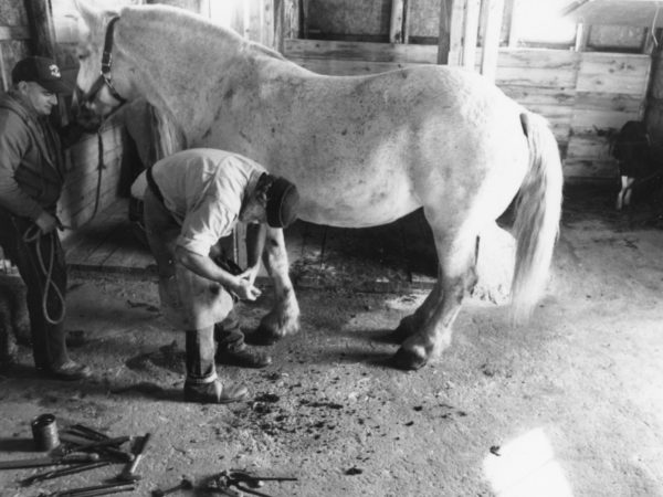 Farrier Bill Balling trimming the hooves of a draft horse in Waddington