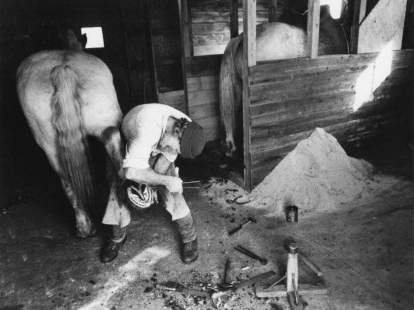 Farrier Bill Balling works on a draft horse in Waddington