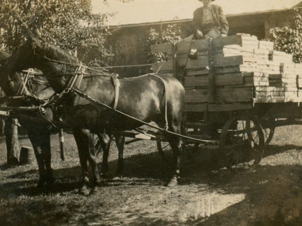 Farmer driving horse-drawn wagon of boxed produce in Hermon