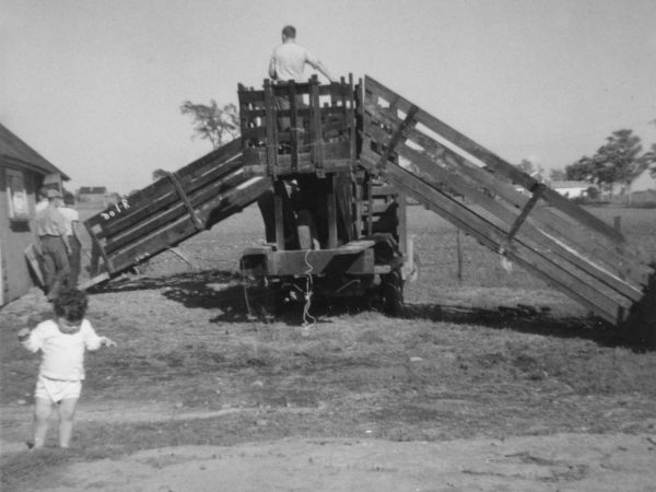 Stewart Cuthbert on top of a sheep chute in Hammond