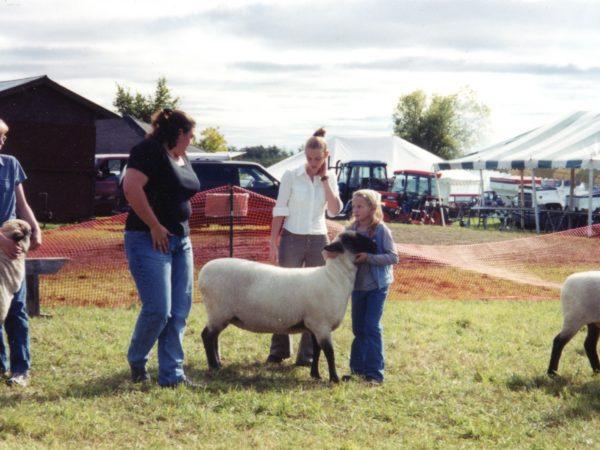 Judging sheep at the Hammond Fair in Hammond