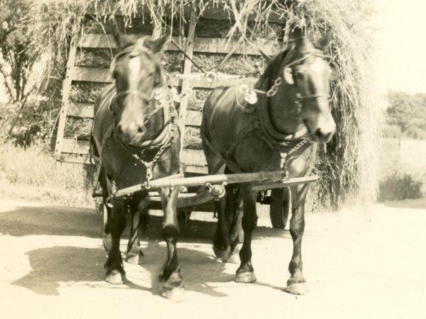 Hauling hay on the McGregor Farm in Hammond
