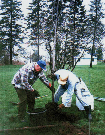 Volunteers plant a tree in Rensselaer Falls
