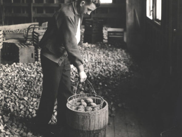 Man sorts potatoes in a barn at Canton ATC in Canton
