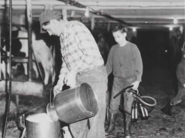 Bob Thompson pouring milk into a pail in Lisbon