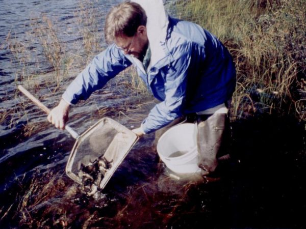 Dan Josephson stocking fall fingerling brook trout in a pond in Old Forge