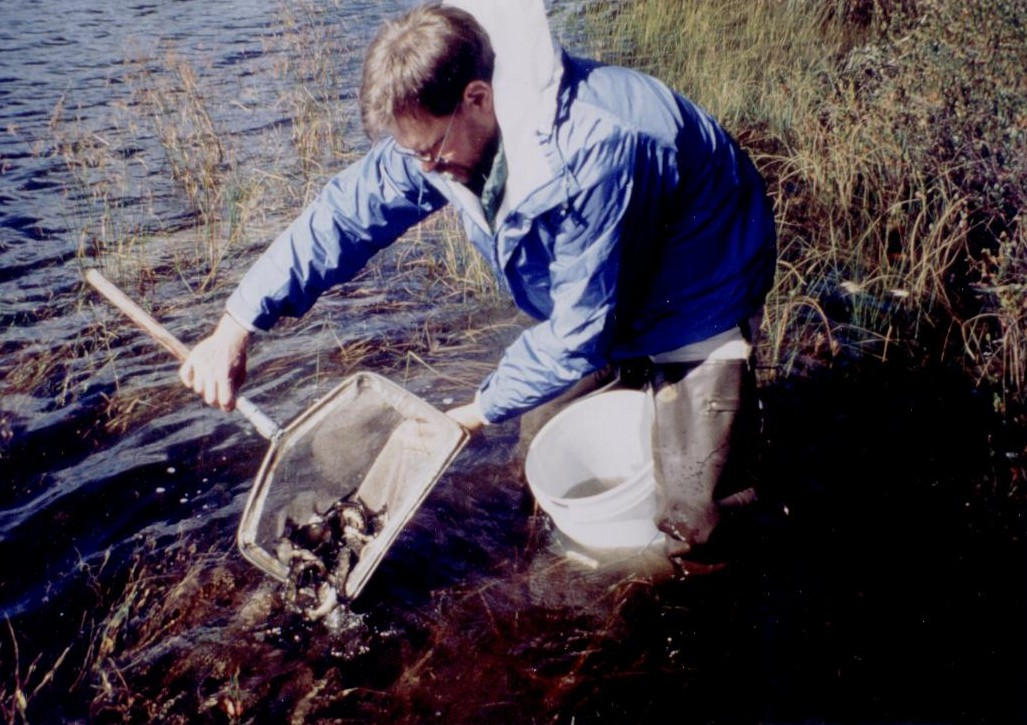 Dan Josephson stocking fall fingerling brook trout in a pond