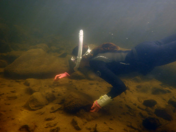 Eileen Randall scuba diving to survey mussels populations in Old Forge