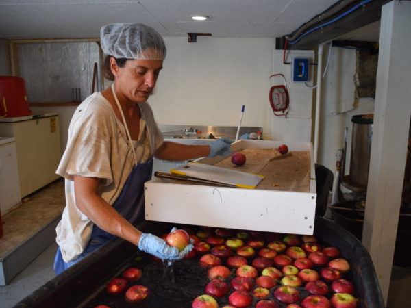 Michelle Bush washing and inspecting apples for Canton Apples in Norfolk