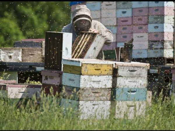 Beekeeper Works on Hive Boxes near Bucks Bridge