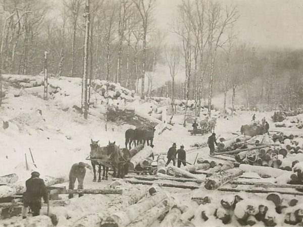 Lumberjacks at work unloading logs at a log yard in Newbridge
