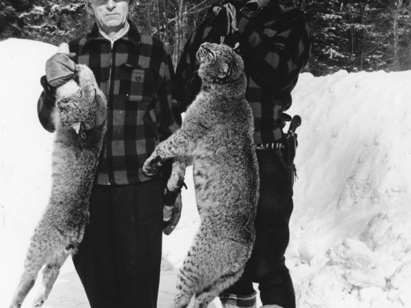Hunters posing with bobcats on Ball Mountain near Old Forge