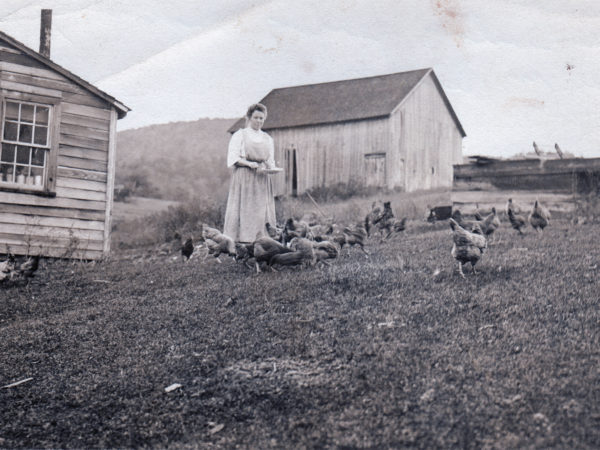 Woman feeding chickens in Benson