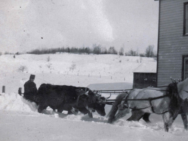Plowing the road with oxen and horses in Hope