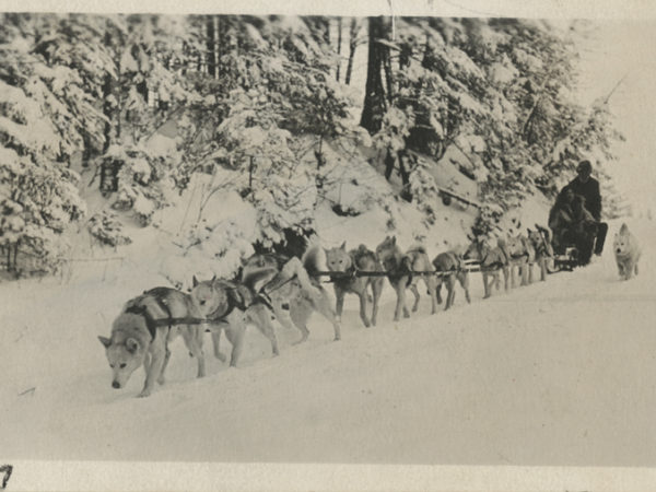 Team of dogs pulls sled in Lake Placid
