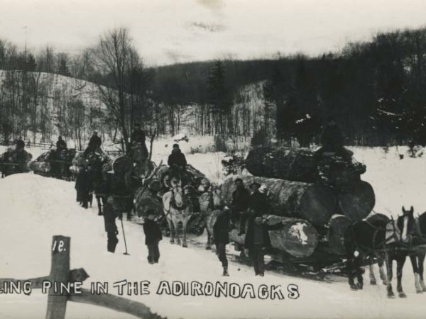 Seven horse-drawn bobsleds loaded with pine logs being pulled through the Adirondacks