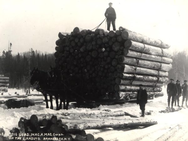 Man stands atop enormous load of logs on a bobsled in Brandreth Park
