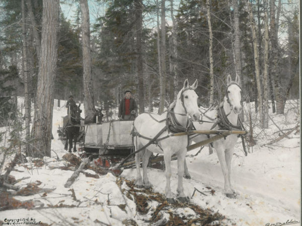 Two teams of horses haul maple sap for the Horseshoe Forestry Company in Piercefield