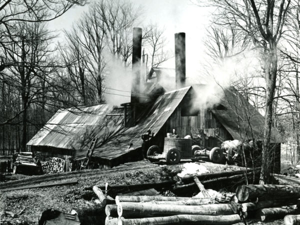 Unloading sap at a maple sugar house in Boonville