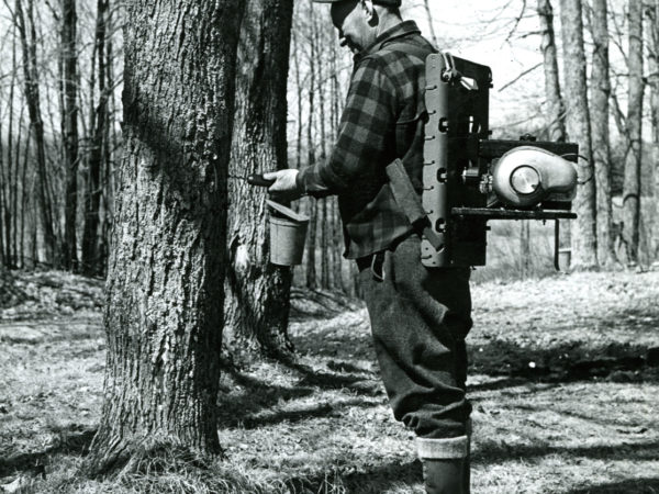 Man uses backpack mounted drill to tap a maple tree
