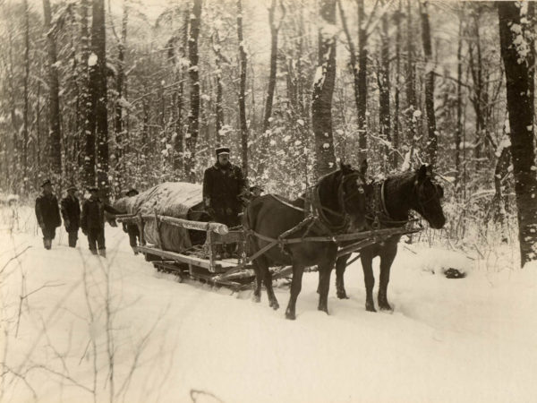 Horses pull Christmas tree destined for New York City through the woods in the Town of Webb