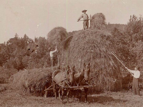 The Hoffmeister brothers stacking hay in Morehouse