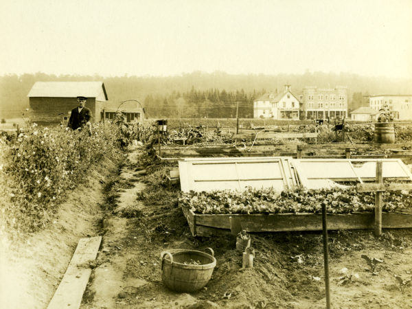 Garden with cold frames in the village of Old Forge