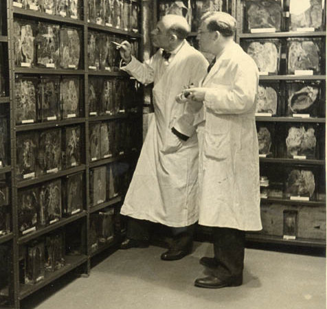 Two doctors examine a wall of lung samples inside the Trudeau Sanitarium in Saranac Lake