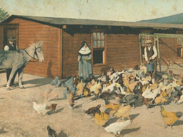Men and nun feed chickens in the yard at Gabriels Sanatorium in Saranac Lake