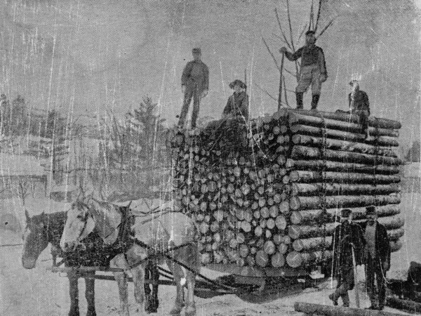 : Hauling a load of spruce logs in Elizabethtown