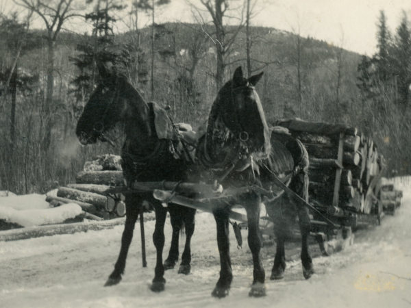 A team of horses pulling a load of pulpwood at Lumber Camp III in Keene Valley