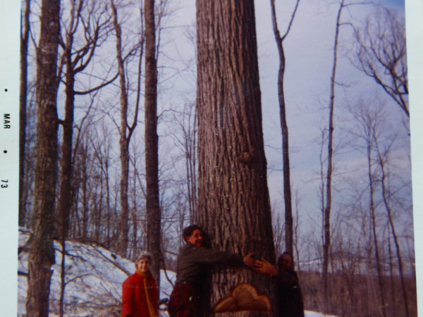 Logger Howard Pelletier Cutting Down a Tree in North Creek